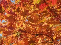 fall-leaves-1432747-1-m