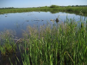 A photo of a wetland
