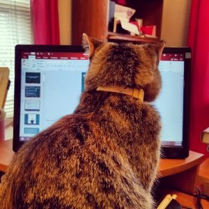 cat watching a computer screen